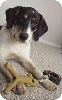 Pointer/Labrador Retriever Mix Puppy for adoption in Ypsilanti, Michigan - Peanut