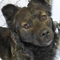 Adopt A Pet :: Leo - Wickenburg, AZ
