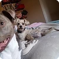 Adopt A Pet :: Hon - Santa Ana, CA
