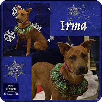 Shepherd (Unknown Type) Mix Dog for adoption in Washington, Pennsylvania - Irma