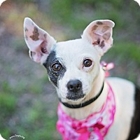 Adopt A Pet :: Lulu - Kingwood, TX