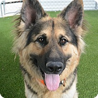 Adopt A Pet :: Bravo - Meridian, ID