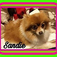 Adopt A Pet :: Sandie - Poplarville,, MS