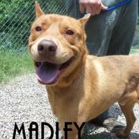 Adopt A Pet :: MARLEY - Franklin, NC