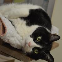 Adopt A Pet :: Elza - Oshkosh, WI