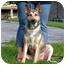 Photo 1 - German Shepherd Dog Mix Dog for adoption in STREETSBORO, Ohio - TOFFEE