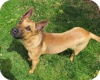 Shepherd (Unknown Type) Mix Puppy for adoption in Salem, Oregon - Rin
