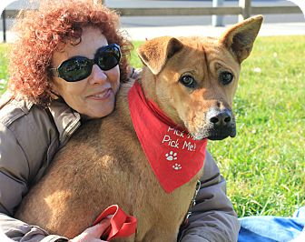 German Shepherd Dog/Boxer Mix Dog for adoption in Los Angeles, California - Vera shy sweet - see video!