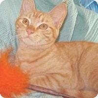 Adopt A Pet :: Prince Harry - Miami, FL