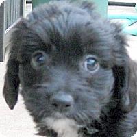 Adopt A Pet :: Baby Kelly - Oakley, CA