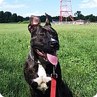 Adopt A Pet :: Lyla-Courtesy Post - Phoenix, AZ