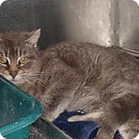 Adopt A Pet :: Oliver - Douglas, ON