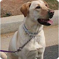 Adopt A Pet :: Goldie C - Cumming, GA