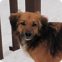 Adopt A Pet :: Miles - Beachwood, OH