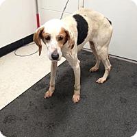 Adopt A Pet :: Sadie - Lancaster, VA
