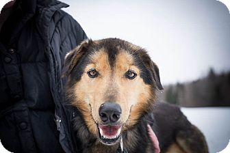 Husky Mix Dog for adoption in Jefferson, New Hampshire - Clivey