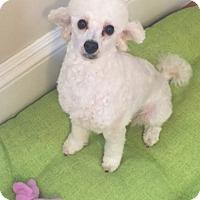 Adopt A Pet :: Toast - Dover, MA