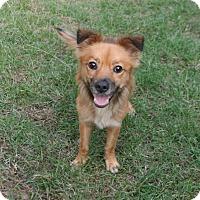 Adopt A Pet :: Festus - Lufkin, TX