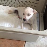 Adopt A Pet :: Taffy - Shannon, GA