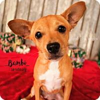 Adopt A Pet :: Bambi - San Antonio, TX