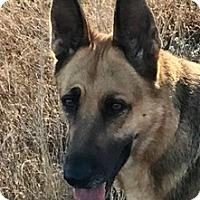 Adopt A Pet :: Mahren - Dripping Springs, TX