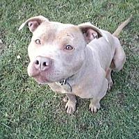 Adopt A Pet :: Buttercup - Montclair, NJ