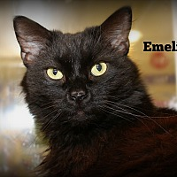Adopt A Pet :: Emilio - Springfield, PA