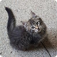 Adopt A Pet :: Trey - Pasadena, CA
