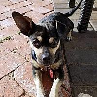 Adopt A Pet :: RALEIGH - San Luis Rey, CA