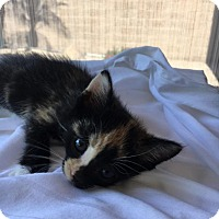 Adopt A Pet :: Fiesty Fiona - Scottsdale, AZ