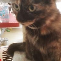 Adopt A Pet :: Bambi - Jackson, MO