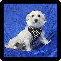 Adopt A Pet :: Lindsey - San Diego, CA