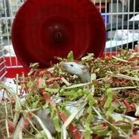 Adopt A Pet :: Artemis - Edmonton, AB