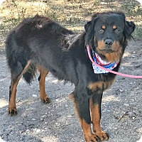 Adopt A Pet :: bernie - Midvale, UT