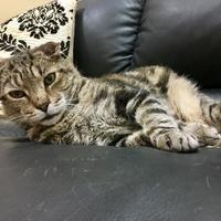 Adopt A Pet :: Kinsley - Columbia, SC