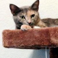 Adopt A Pet :: Melana - Santa Fe, TX