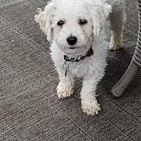 Adopt A Pet :: Blossom 3021 - Toronto, ON