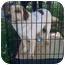 Photo 2 - Australian Shepherd/Cattle Dog Mix Dog for adoption in Fowler, California - Felix