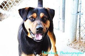 Rottweiler Mix Dog for adoption in Columbus, Georgia - Dave 7838
