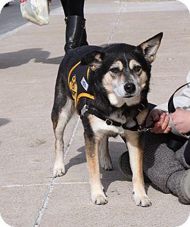 Shepherd (Unknown Type) Mix Dog for adoption in Waldorf, Maryland - Callie