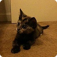 Adopt A Pet :: Gretchen - Beverly Hills, CA