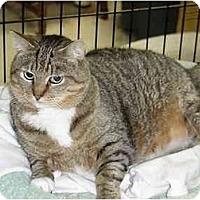 Adopt A Pet :: Woody - Chesapeake, VA