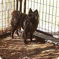 Adopt A Pet :: KAI - Hesperus, CO