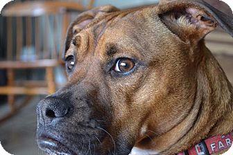Boxer Mix Dog for adoption in Grand Rapids, Michigan - sadie