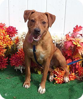 Beagle Mix Dog for adoption in Marietta, Georgia - NADIA