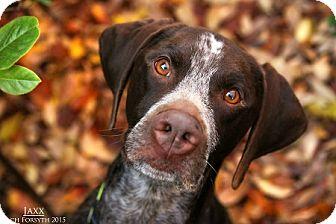 Pointer Mix Dog for adoption in Portland, Oregon - Jaxx