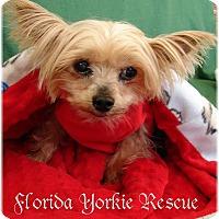 Adopt A Pet :: TOTO - Palm City, FL