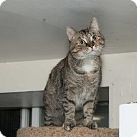 Adopt A Pet :: Ashley - Chicago, IL