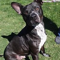 Adopt A Pet :: Noah - Newport Beach, CA