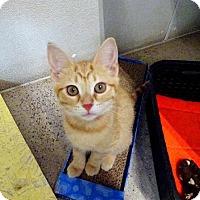 Adopt A Pet :: Rachel - Belleville, MI